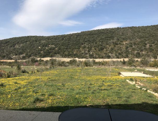 terrain jauneJPG